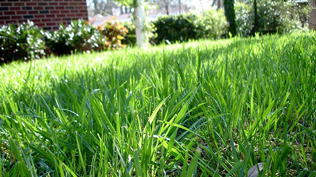 Irrigation Tips for a Greener Lawn