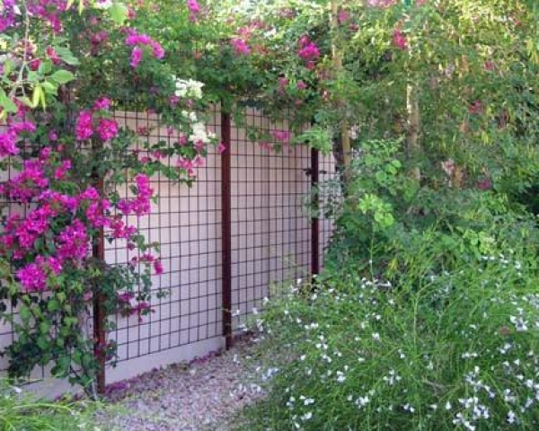 Ideas For Backyard Privacy compact power backyard privacyjpg Compact Power Backyard Privacyjpg