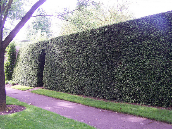 privacy-hedges-compact-power.png